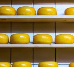 Amsterdam Cheese Tasting
