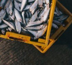 Barcelona Deep Sea Fishing
