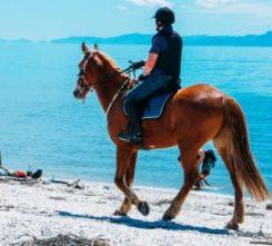 Barcelona Horse Riding
