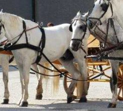 Berlin Horse Carriage Ride
