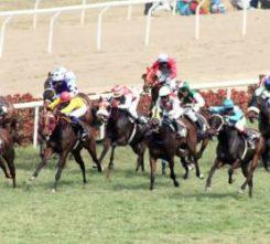 Budapest Horse Race