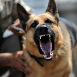 Krakow Dog Attack