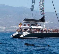 Tenerife Catamaran